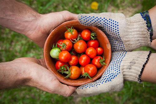 Sharing Economy Green