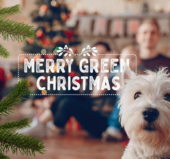 Lettera Auguri Natale - PLT puregreen
