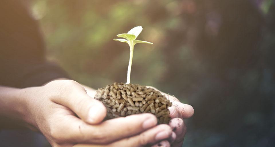 Energia da biomassa: cos'è e come funziona?