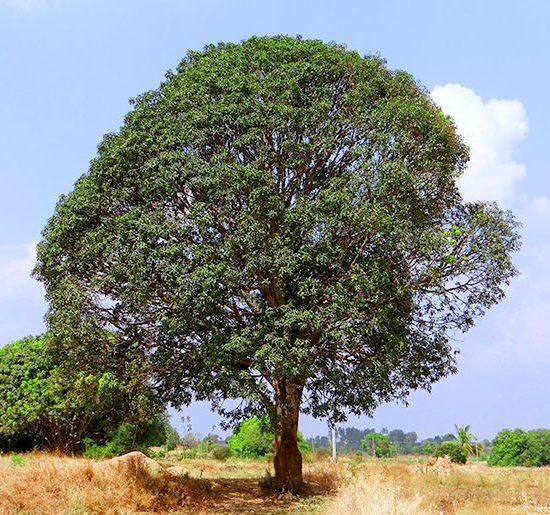 Intervista Ceo Treedom PLT puregreen